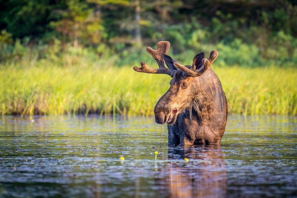 Top 10 Most Dangerous Wild Animals Of Canada